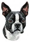 Boston Terrier 5